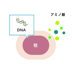 DNA アミノ酸