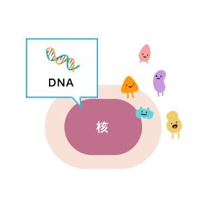 DNA 核